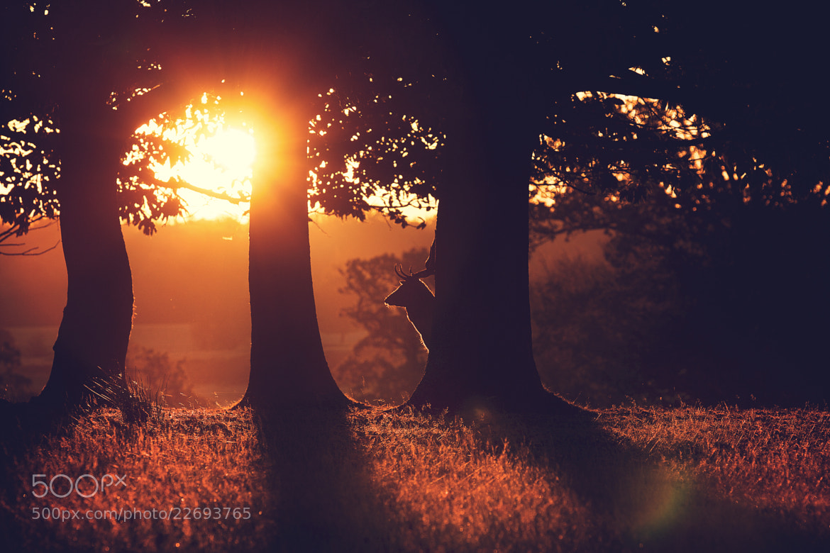 Photograph glow by Mark Bridger on 500px