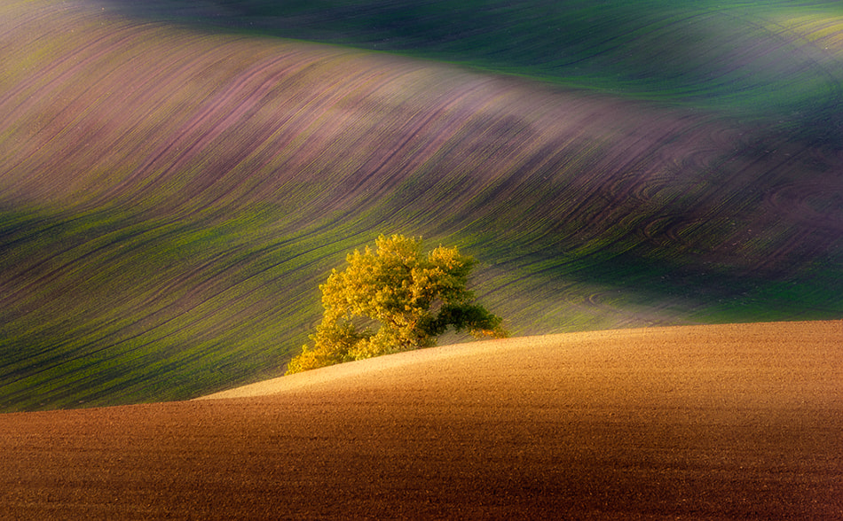 Photograph a tree by Piotr Krol on 500px