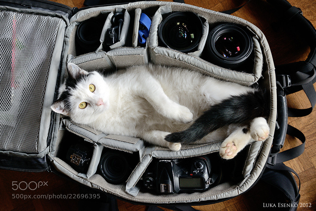 Photograph Olympus meow by Luka Esenko on 500px