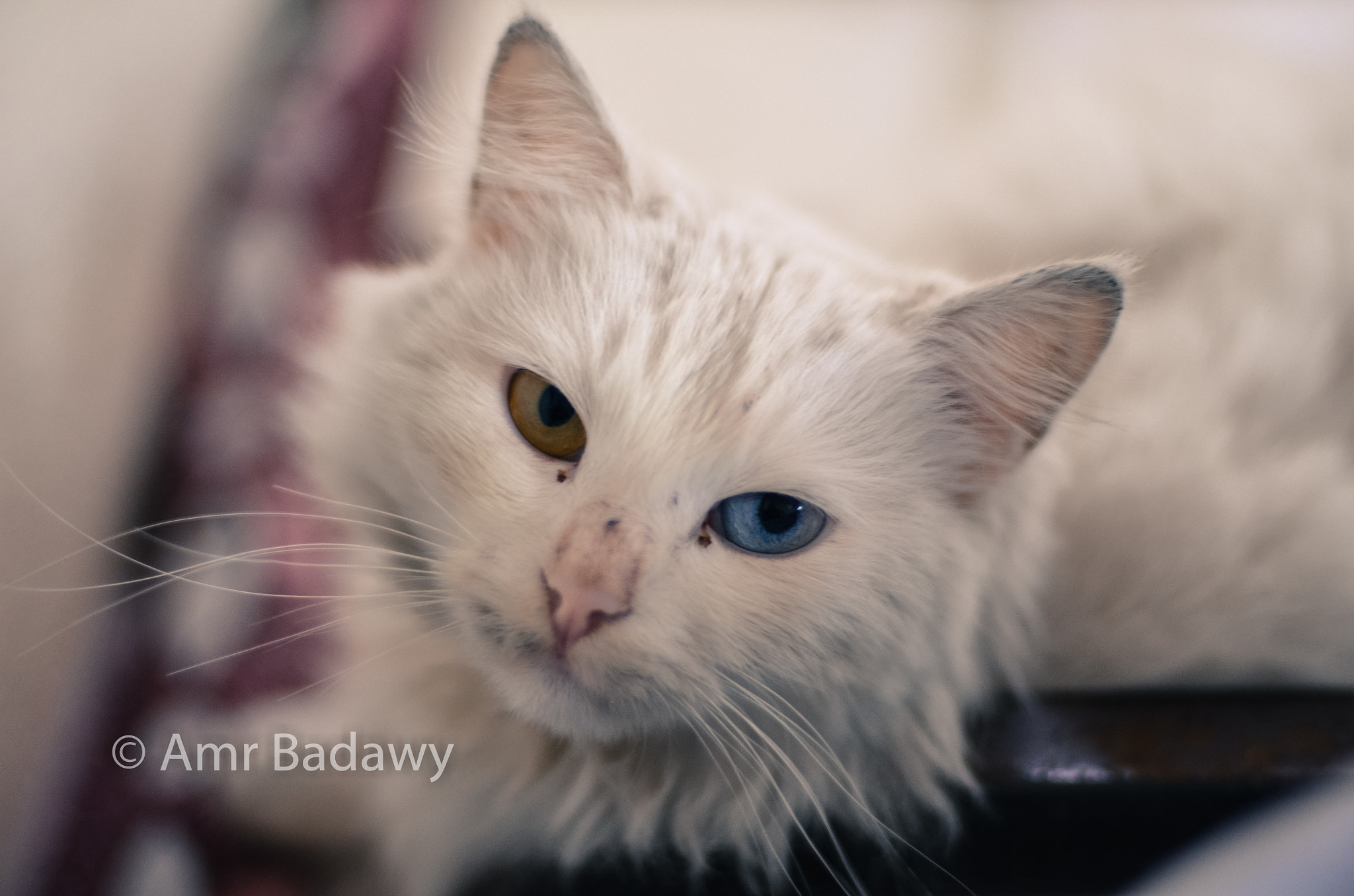Photograph A Cat by Amr Badawy on 500px