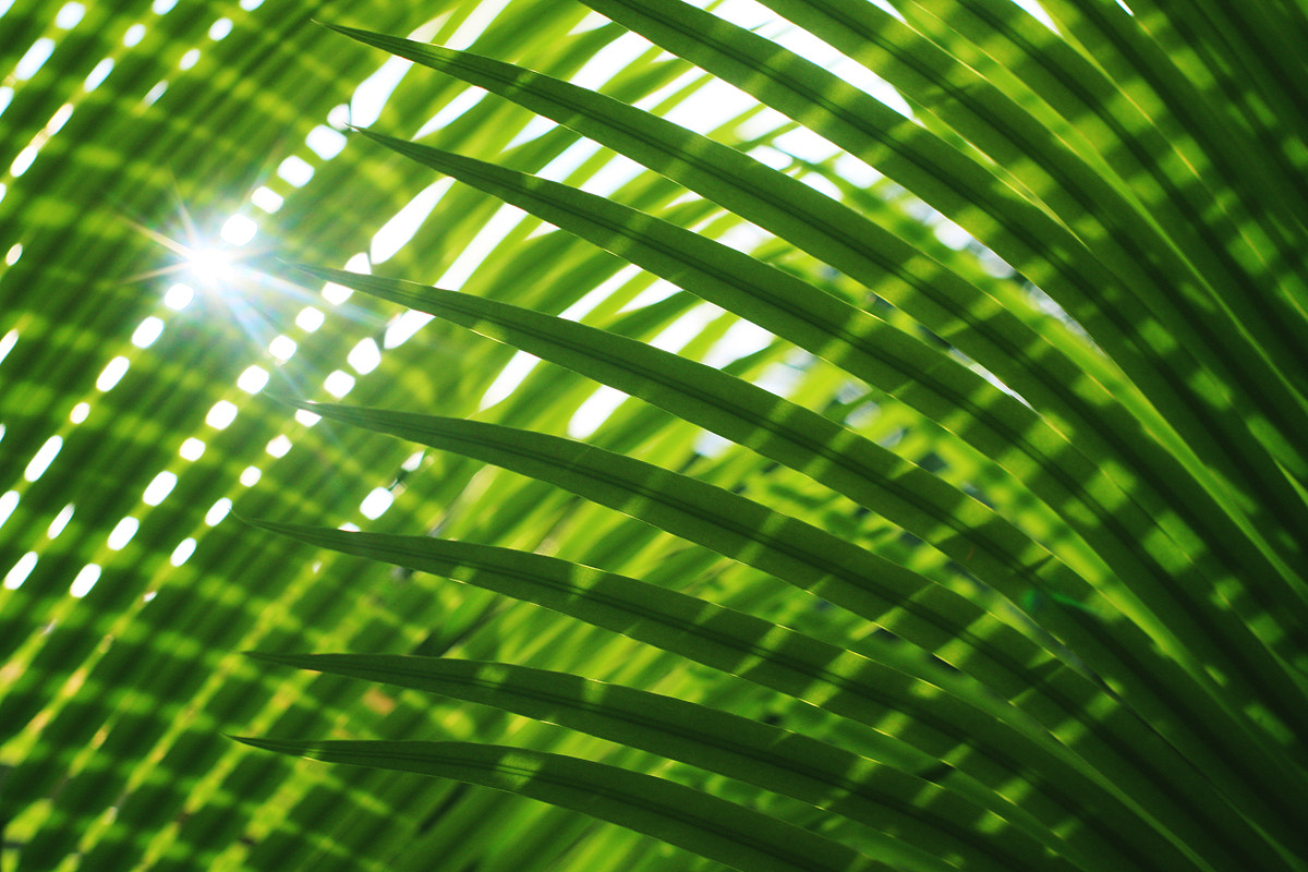 Photograph Sun Star And Luscious Green by Junel Mujar on 500px