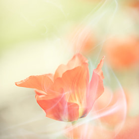 Flower and Smoke by Amir Kaljikovic (amir_kal)) on 500px.com