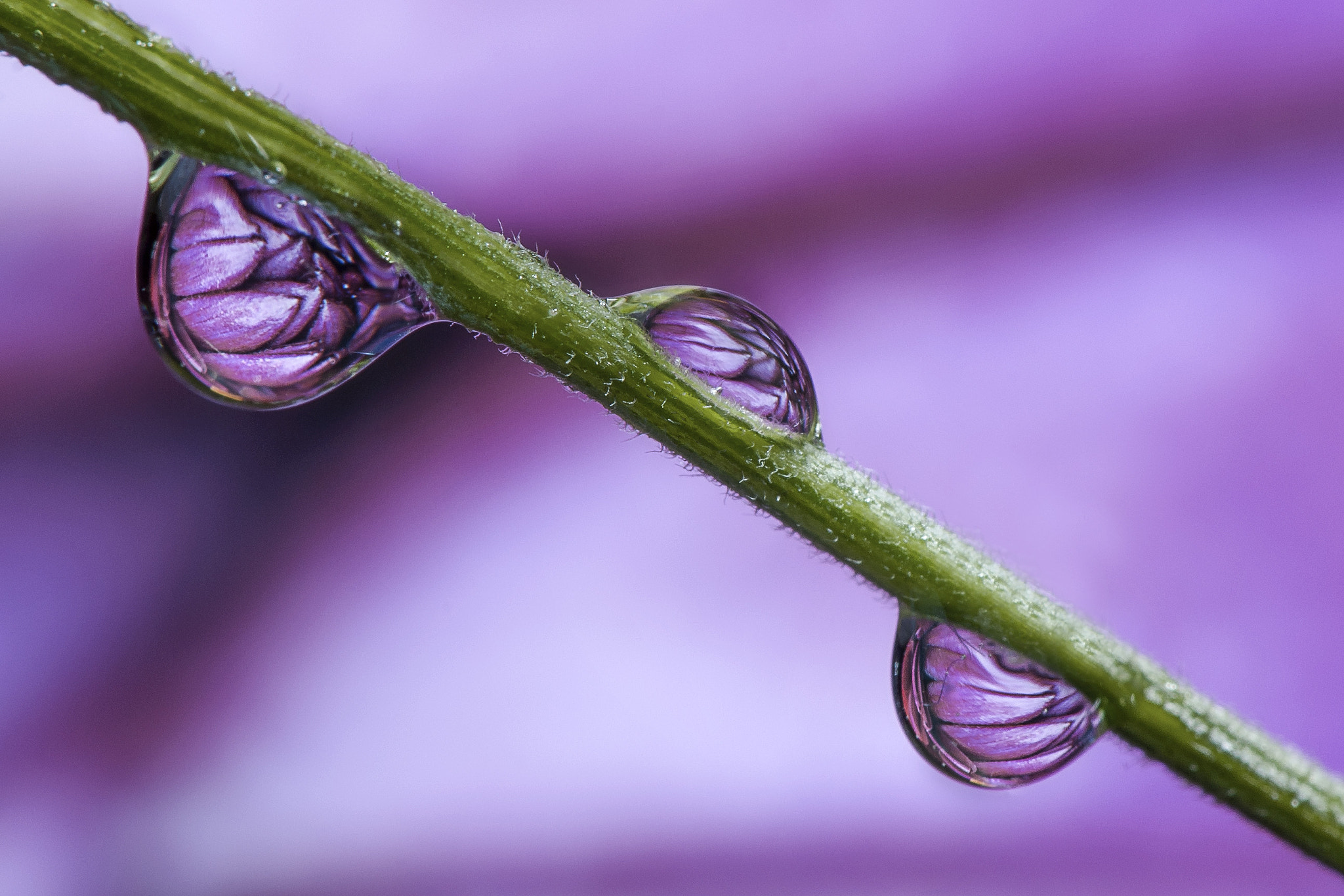 Photograph Dew Drops by Dave Wood on 500px
