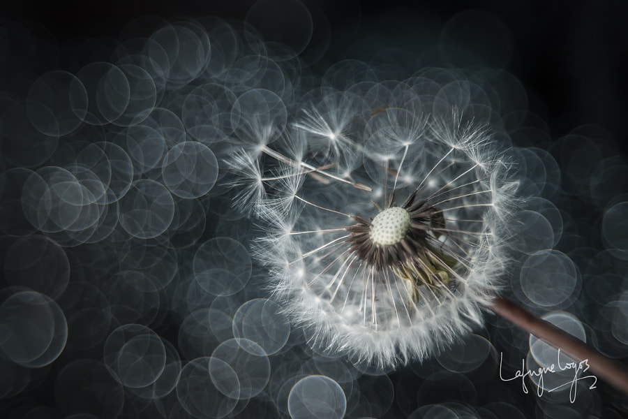 Invitation of the wind by Lafugue Logos on 500px.com