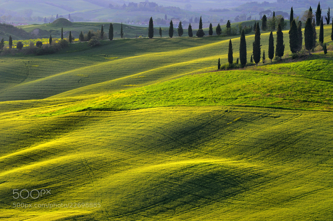 Photograph Rolling Hills and Cypress by Csilla Zelko on 500px