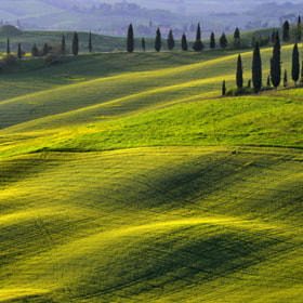 Rolling Hills and Cypress by Csilla Zelko (csillogo11)) on 500px.com