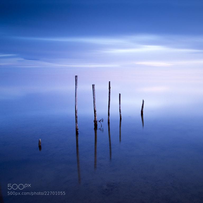 Photograph Blue velvet by Sarah Martinet on 500px