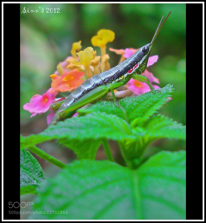 Photograph Elegant by Sinu Nair on 500px