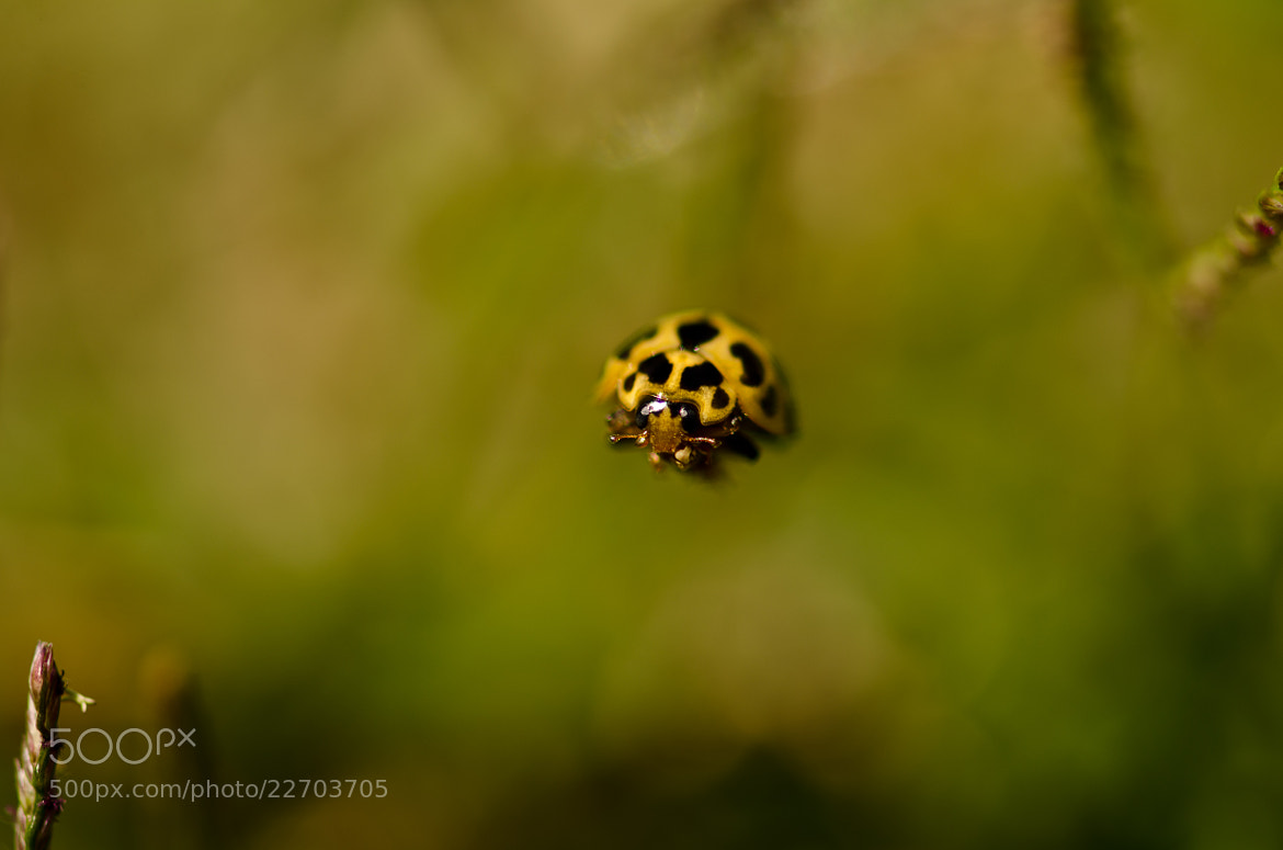 Photograph Verge of Life by Vinoth Kumar on 500px