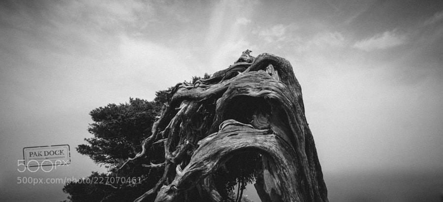 Juniper - El Hierro