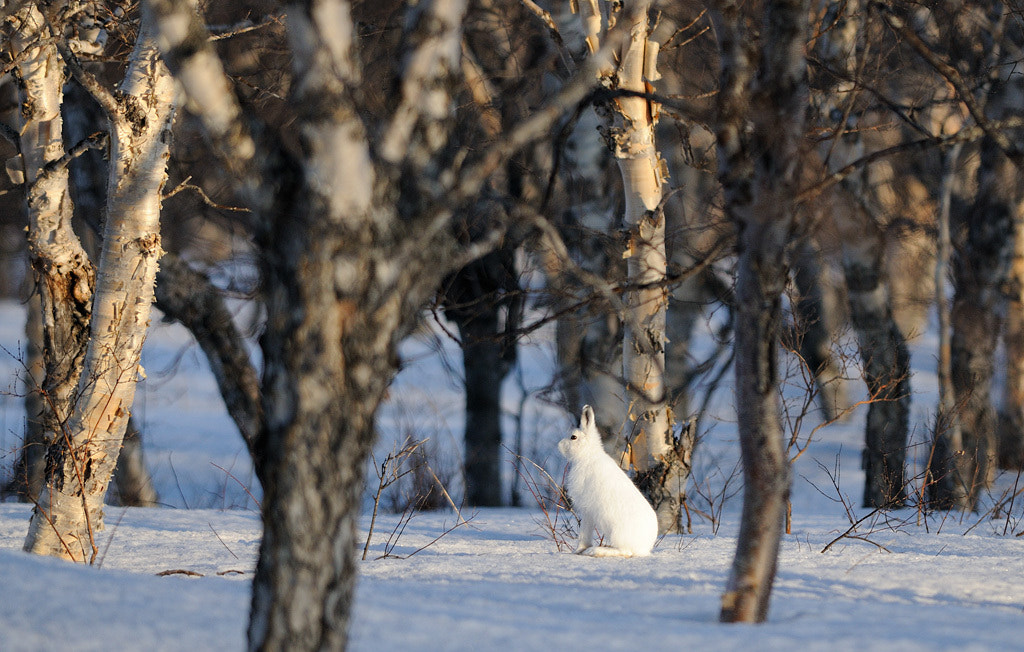 Photograph Follow the white rabbit. by Igor Shpilenok on 500px