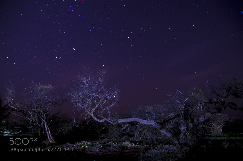 Photograph BLUE NIGHT by Saud Alrshiad on 500px