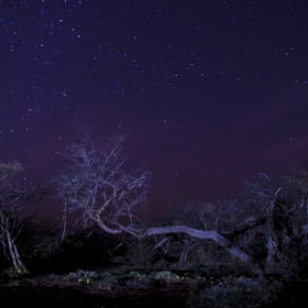 BLUE NIGHT by Saud Alrshiad (SaudAlrshiad)) on 500px.com