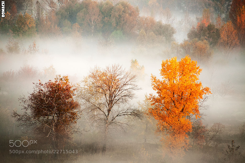 Photograph Autumn by Roman Chubaruk on 500px