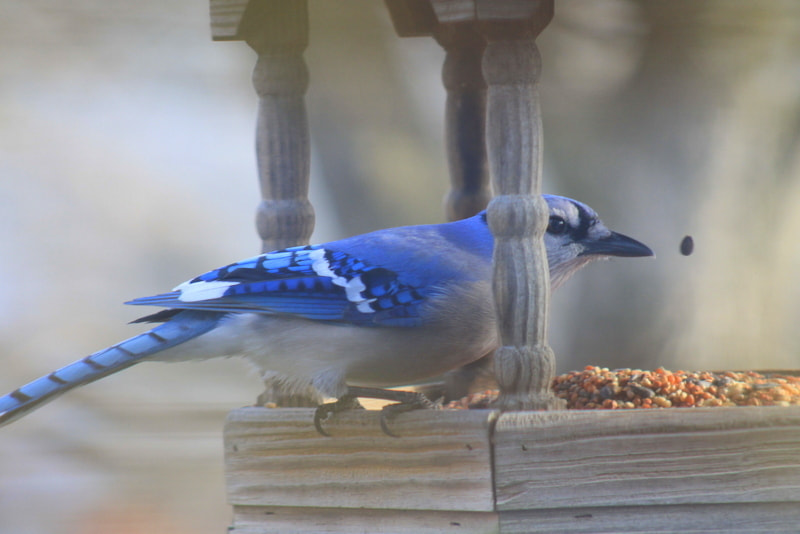 Photograph Catching Breakfast by Wendy Dickey on 500px