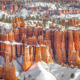 Winter Wonderland In Bryce Canyon