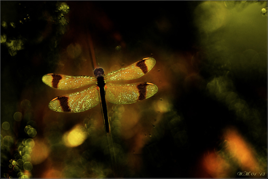Photograph Wings... by Wil Mijer on 500px