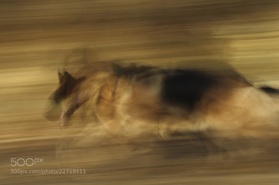 Photograph The Runner by Saghani  on 500px