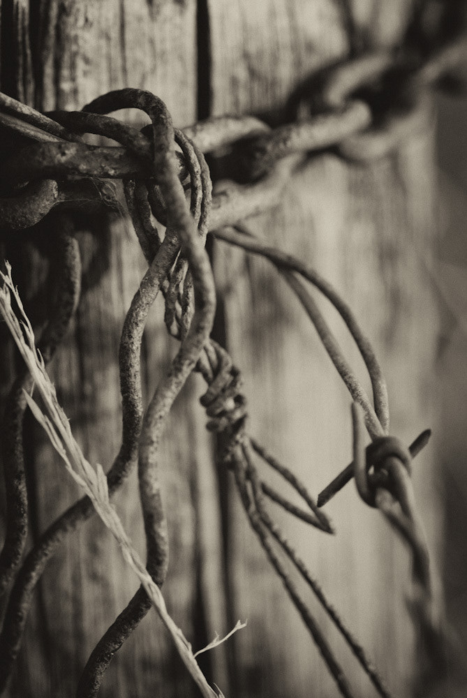 Photograph Rusty Barbed Wire by Jon Brisbin on 500px