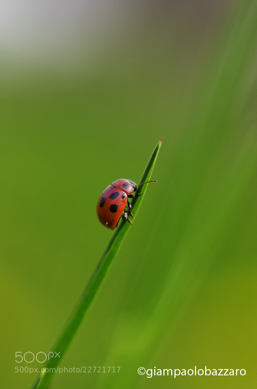 Photograph Coccinella.... by lapococa on 500px