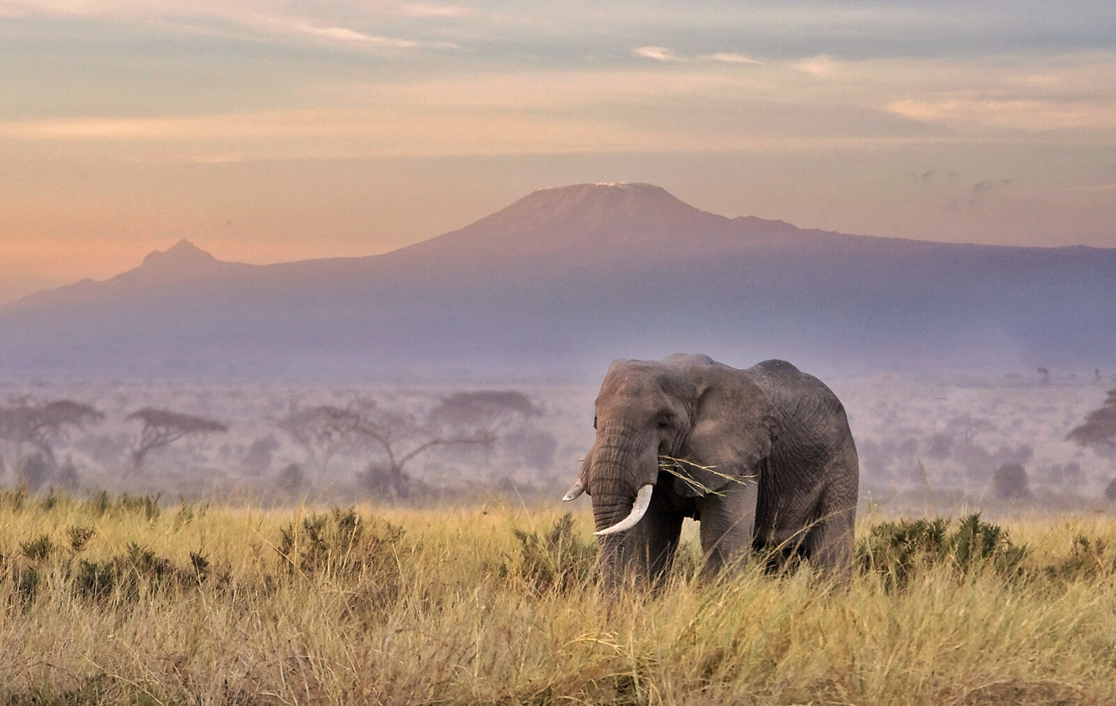 Photograph Breakfast with the elefant by Gerhard Bruckner on 500px