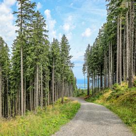 Trees Nesselwag