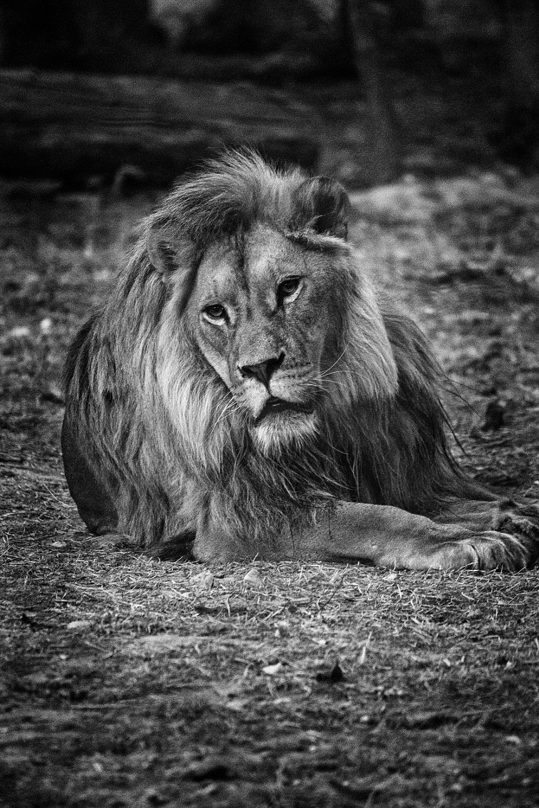 Photograph The King by Antonio Janeski on 500px