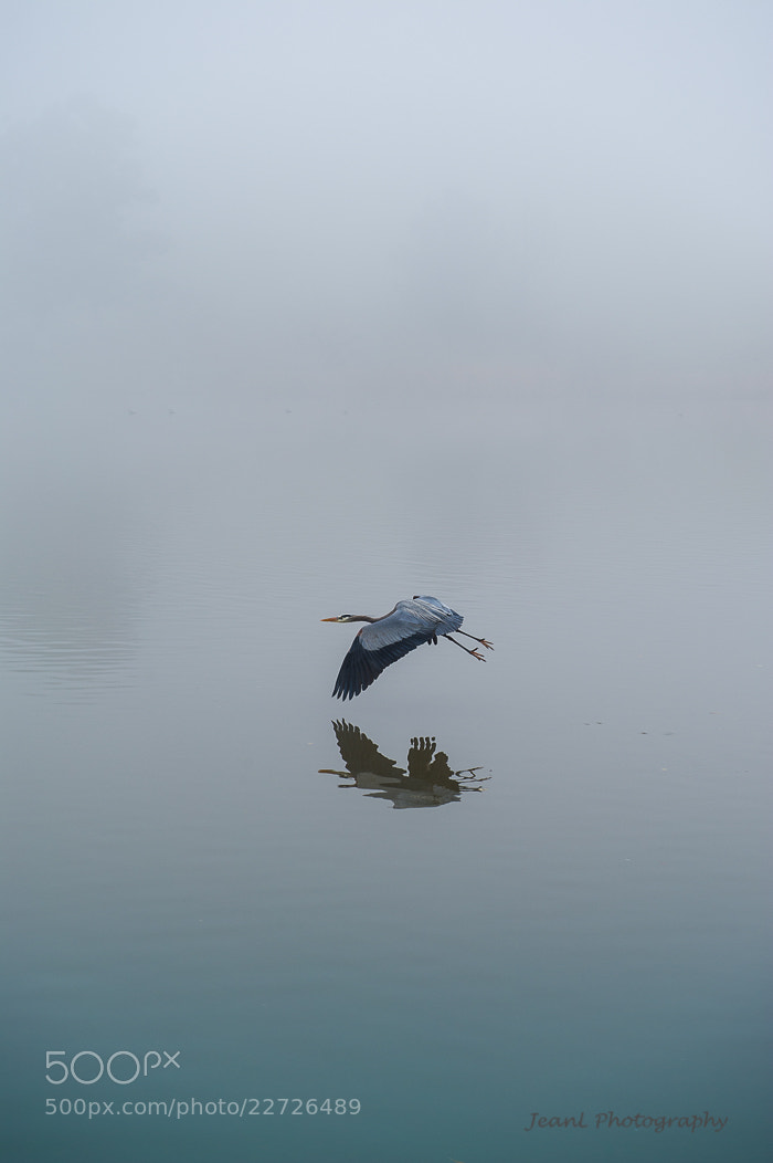 Photograph Solitude by Jean Li on 500px