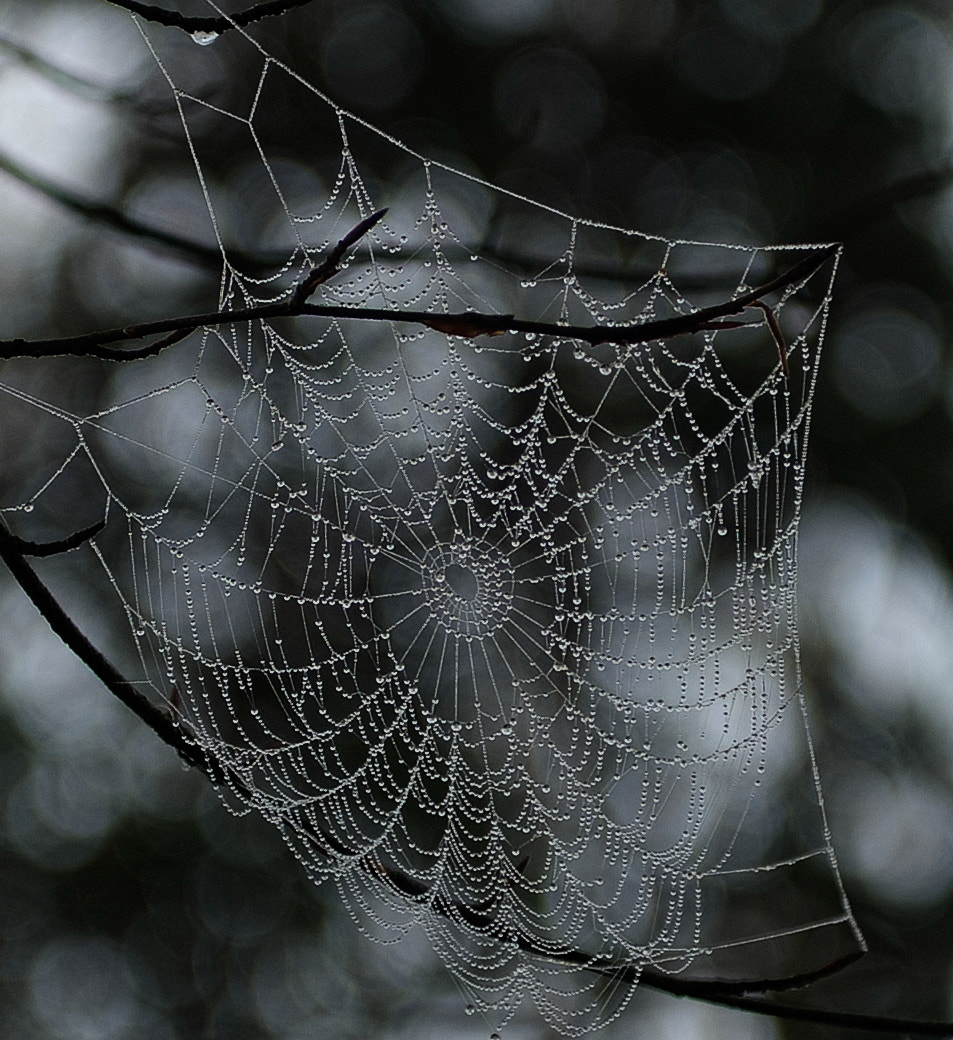 Photograph Wet Web by PerfectStills Martin on 500px