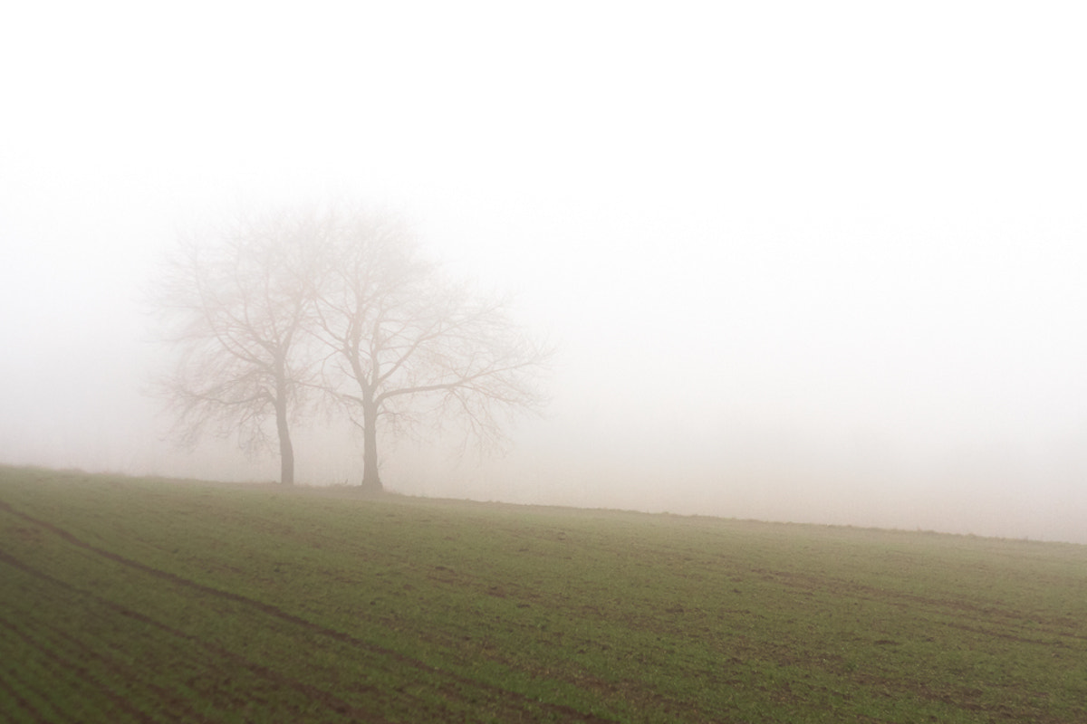 Photograph a misty day by Andreas D. on 500px