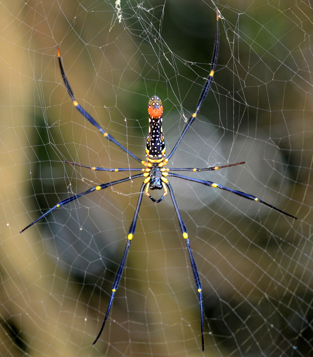 Photograph Spider by Sam Azmy on 500px