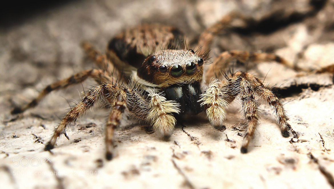 Photograph Spider by Mario Olvera on 500px