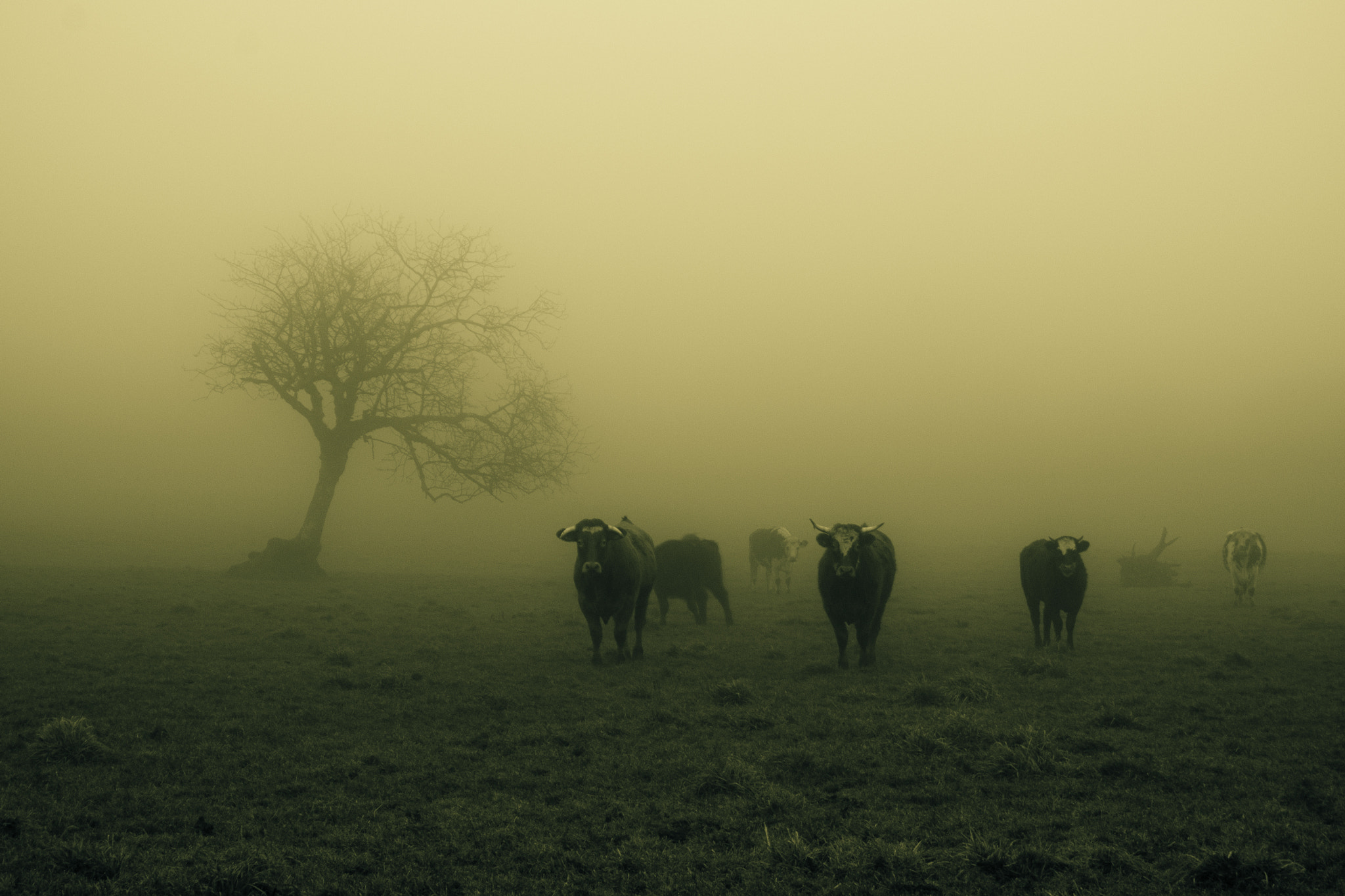 Photograph Vachement brumeux by Lucien Vatynan on 500px