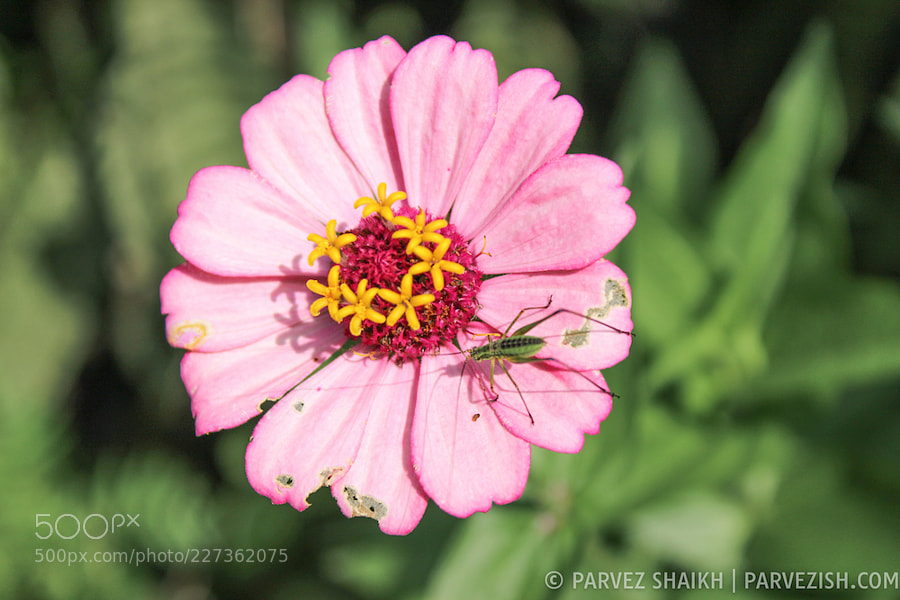An Insect Sitting on a Pink Flower