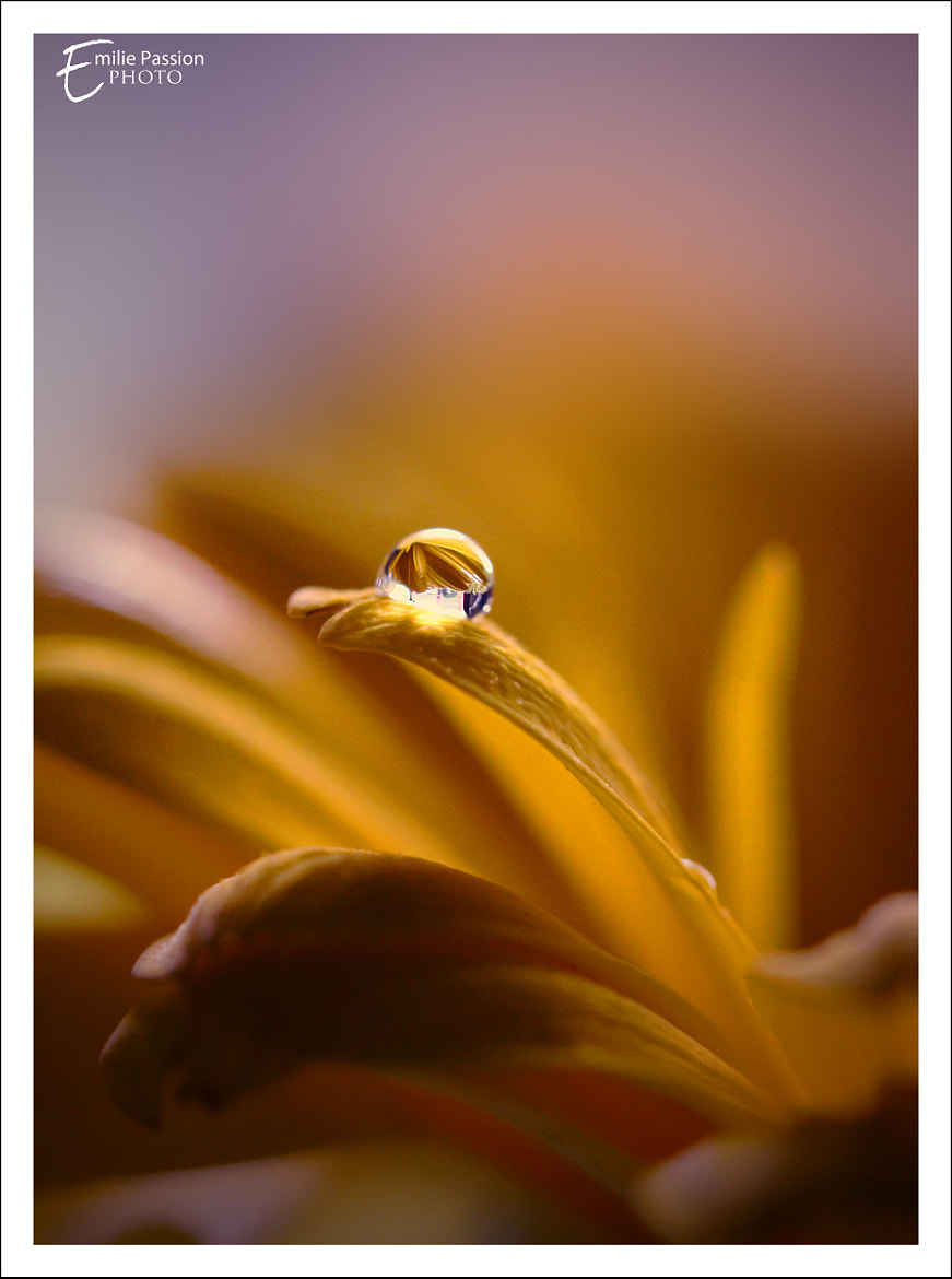 Photograph Some Kind of Poetry by Emilie Manier on 500px