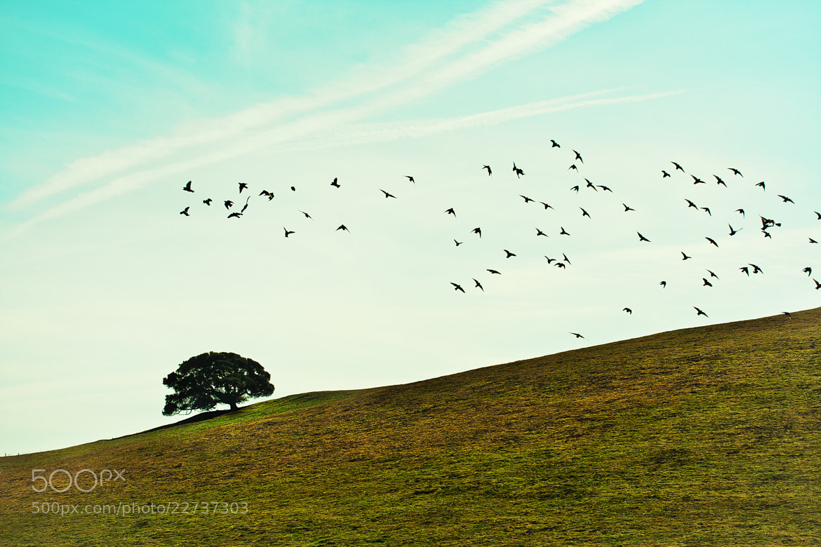 Photograph Dancing Birds by Timothy Preut on 500px