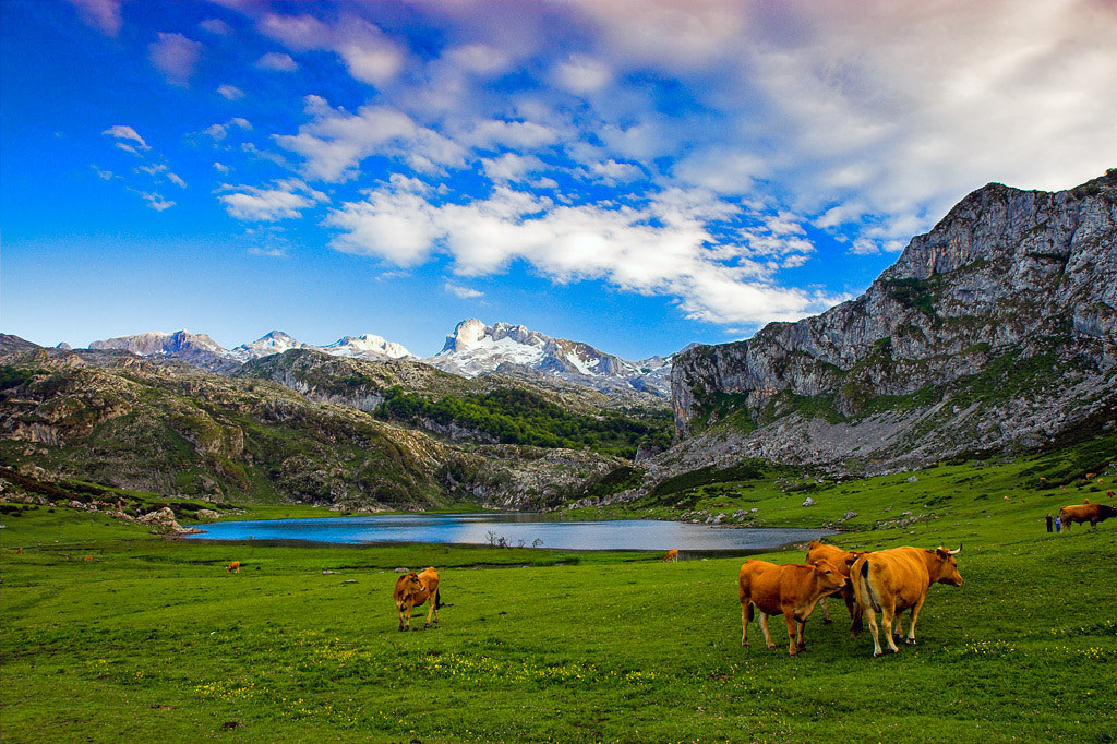 Photograph Lagos de Covadonga - Picos de Europa by Javier Abad on 500px