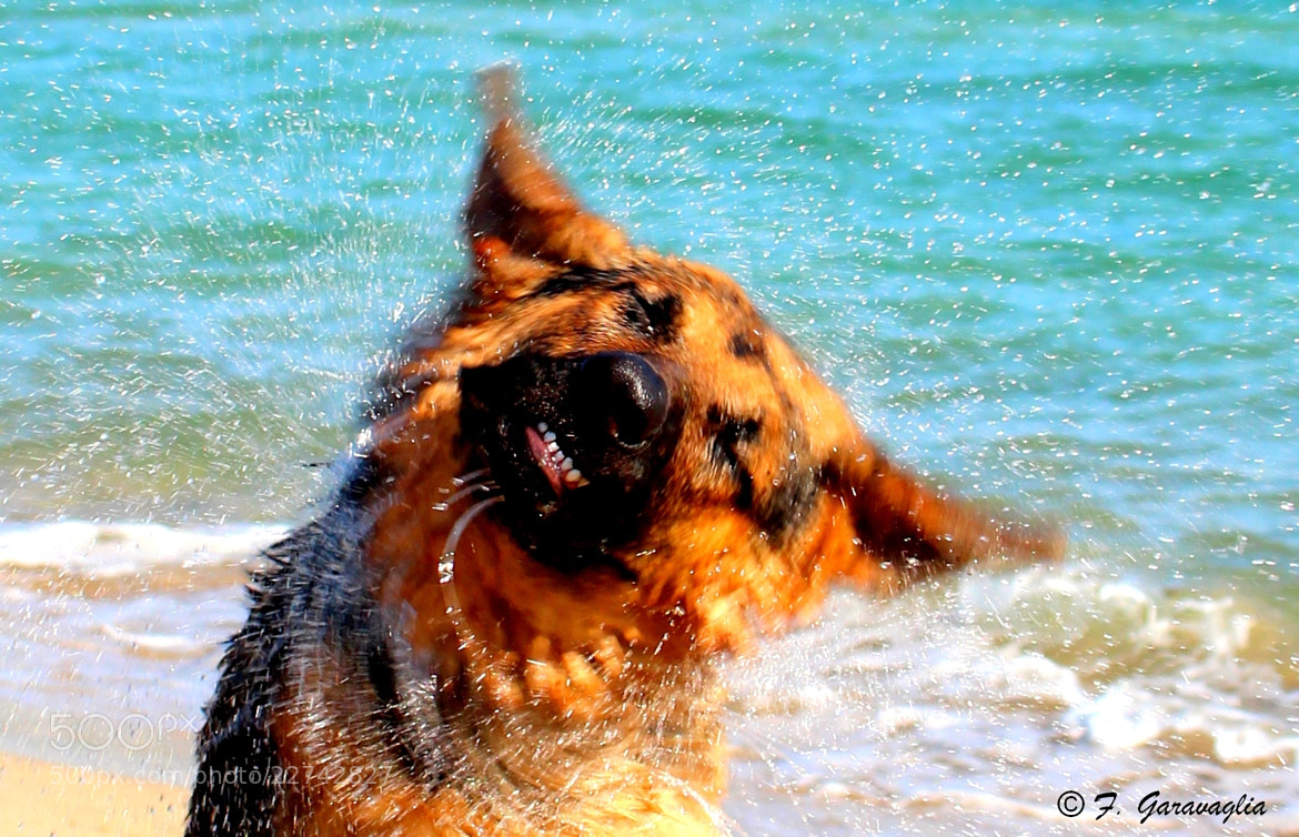 Photograph Kira's shaking by FEDERICA GARAVAGLIA on 500px