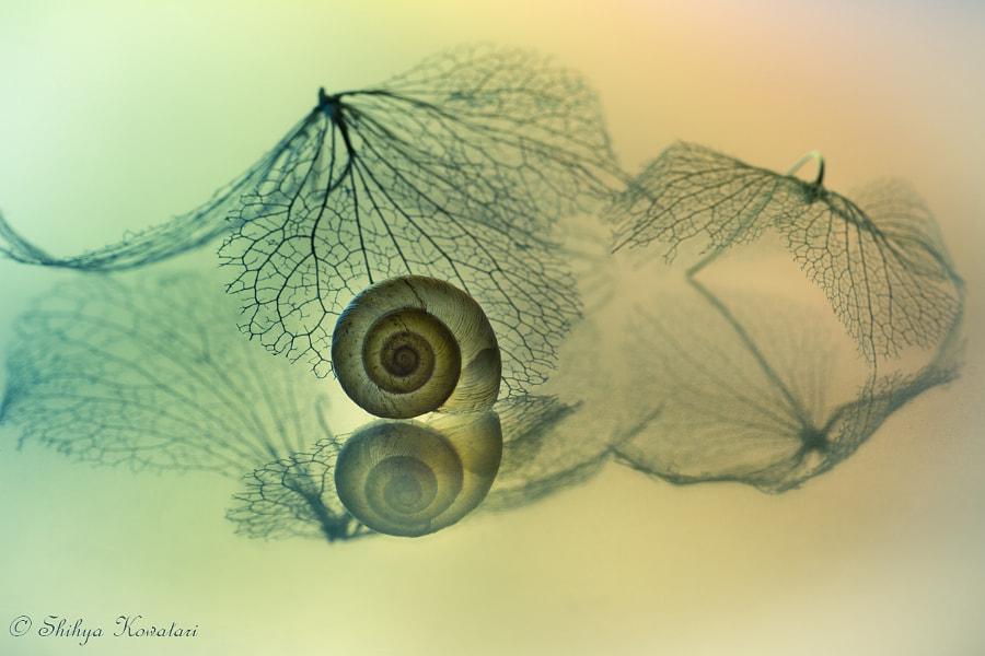 Snail by Shihya Kowatari on 500px.com