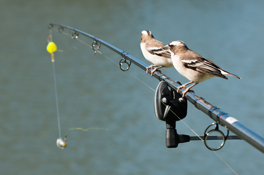 Photograph Fishing birds? by Marc Leroy on 500px