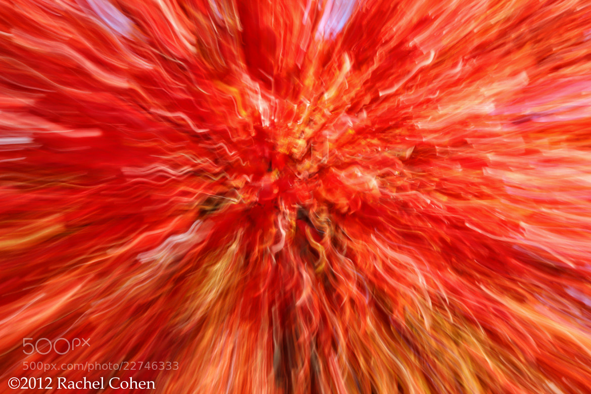 "Photograph ""Out Burst"" by Rachel Cohen on 500px"
