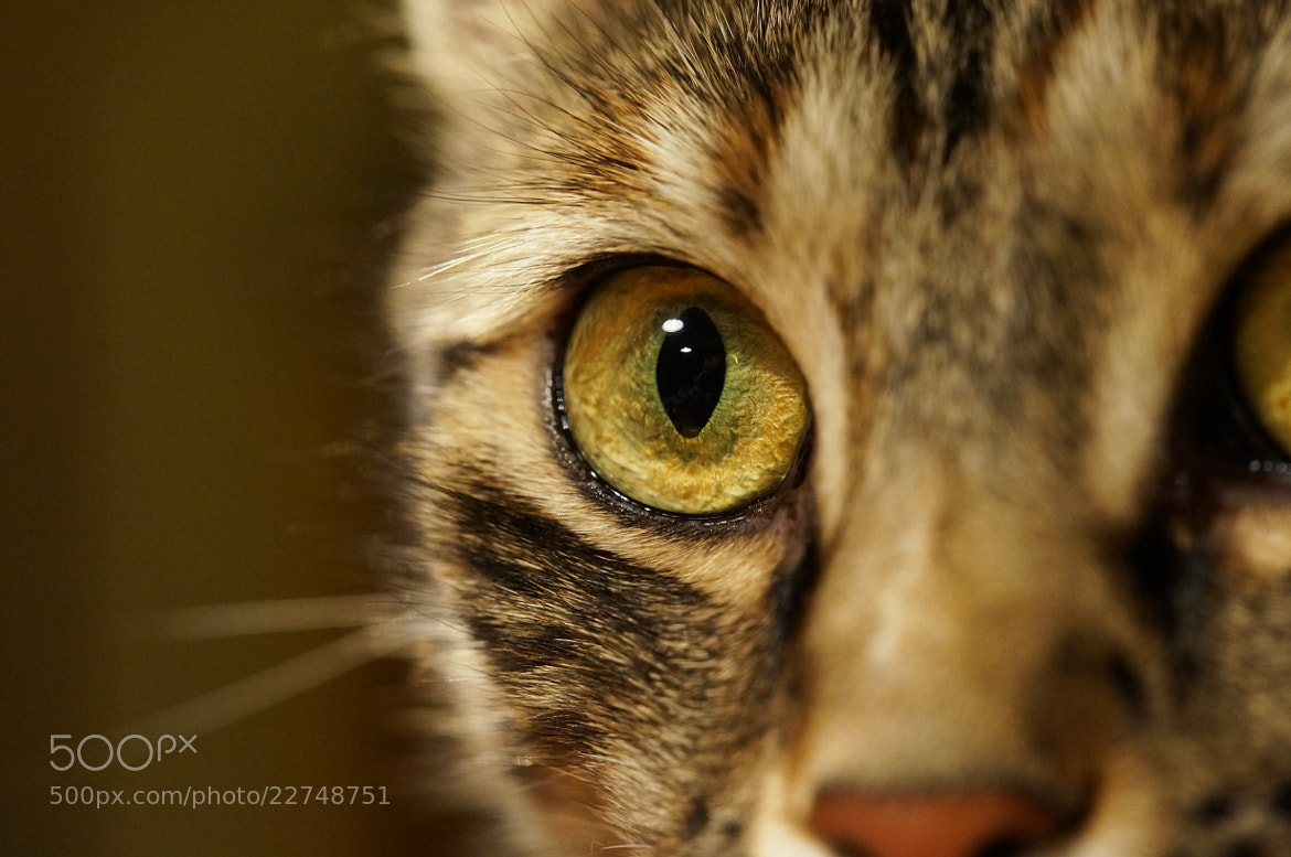 Photograph predators eye by Clarissa  on 500px