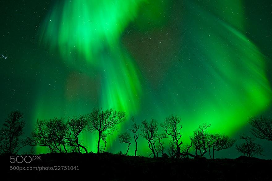 Photograph Forest lights by Øystein Lunde Ingvaldsen on 500px