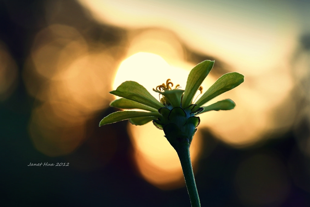 Photograph Before Sunset by Janet Hua on 500px