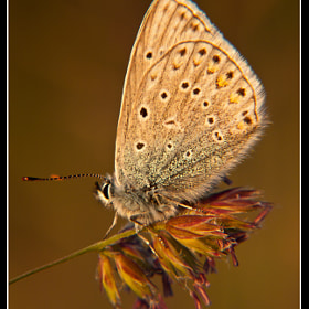 Butterfly  by Michael Lüdtke (michael154l)) on 500px.com