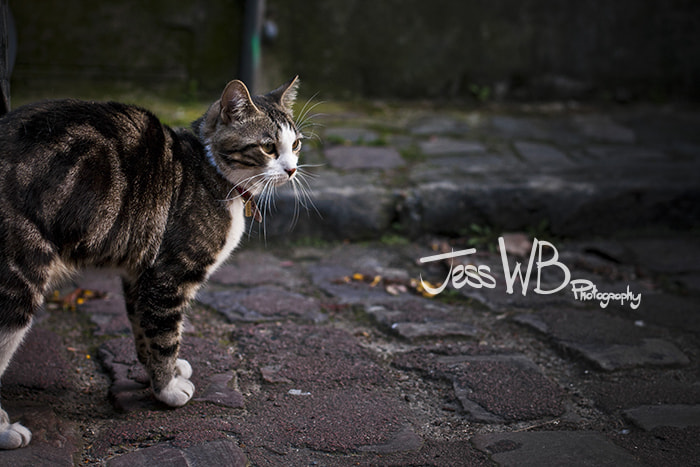 Photograph Street Cat by Jess WB on 500px