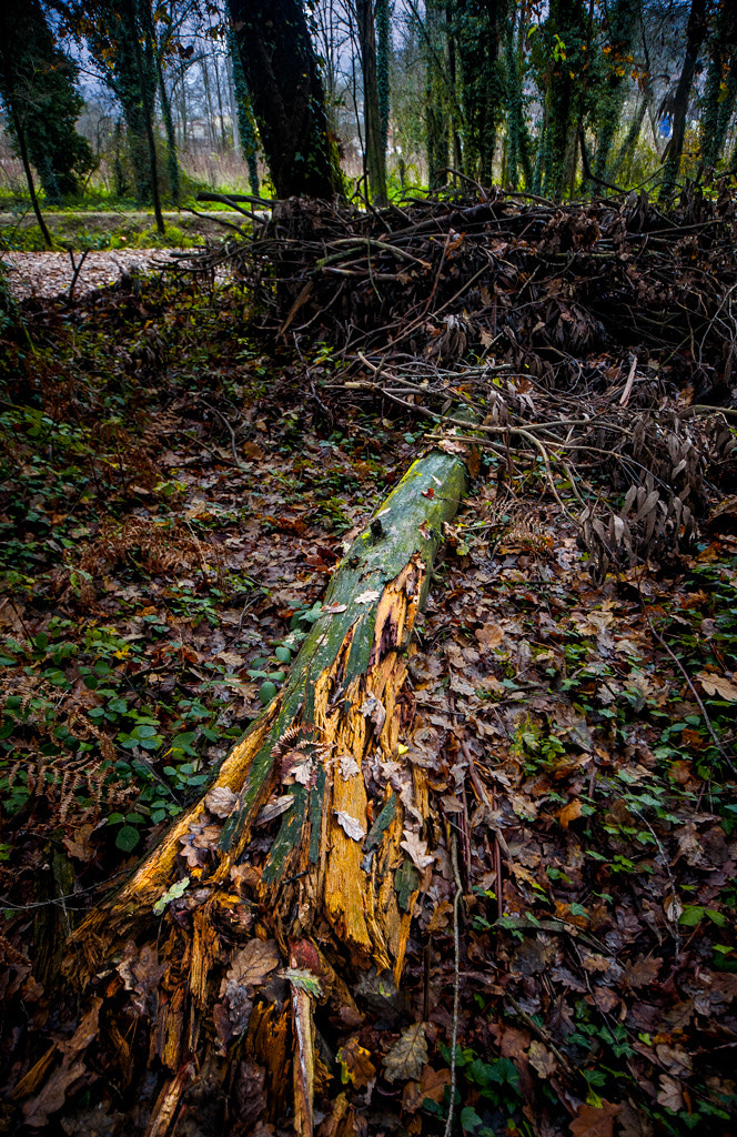 Photograph Fallen tree by Living Picture  on 500px