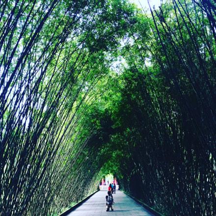 Bambú 1