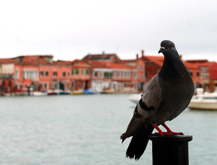 Photograph Venezia by Ashley Z on 500px