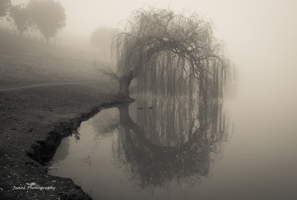 Photograph Magical Willow by Jean Li on 500px